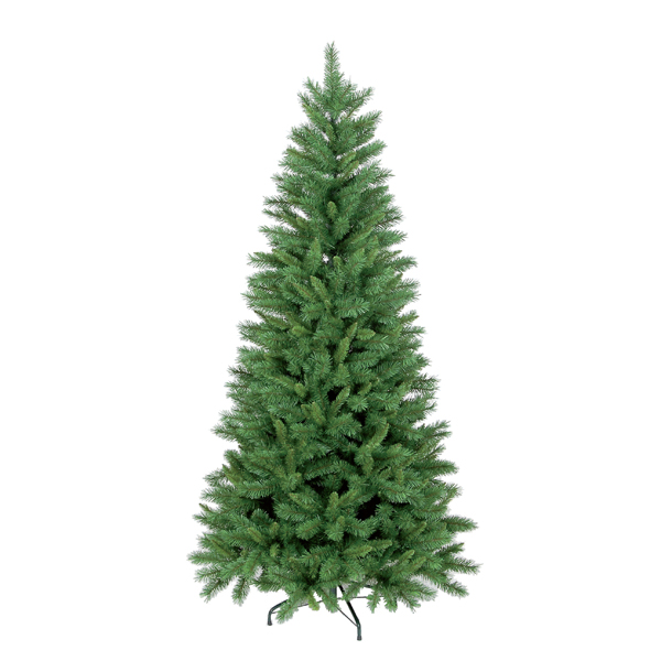 210cm Green New Duchess Spruce No Colour