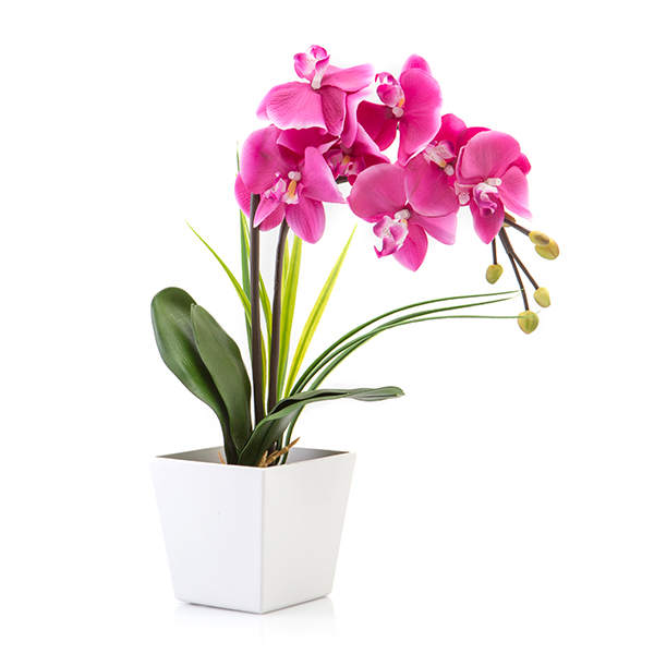 Blossom Collection Phalaenopsis Orchid Potted Plant with 9 LED Lights Purple 1