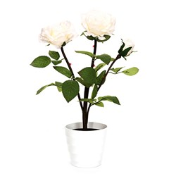 Long-Stemmed Potted Rose with 3 LED Lights