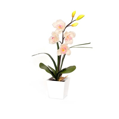 Blossom Collection Cymbidium with 4 LED Lights