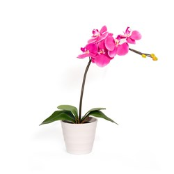 Phalaenopsis with 5 LED Lights