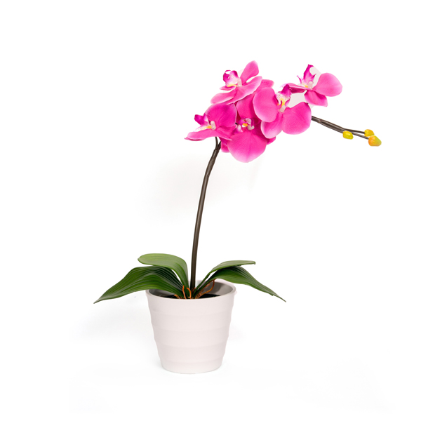 Phalaenopsis with 5 LED Lights Purple 1