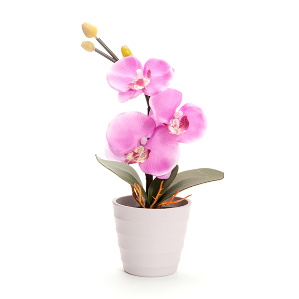 Blossom Collection Phalaenopsis Orchidt with 3 LED Lights Purple