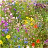 Butterfly & Bee Booster Seed Carpet - 2m x 48cm No Colour