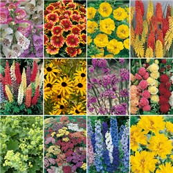 Complete Hardy Garden Perennial Collection - 24 x Plug Plants