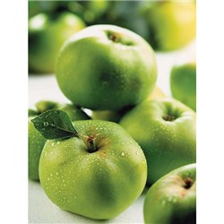 Apple Bramley Potted Fruit Tree 7.5L