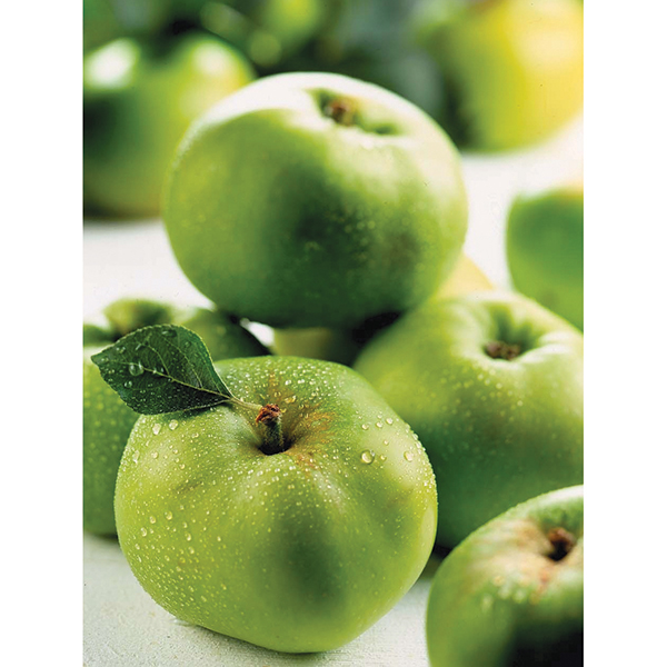 Pair of Bramley Apple Trees 7.5L No Colour