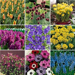 Spring Bulb Collection - 501 x Bulbs