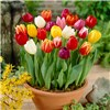 Complete 300 Bulb Garden No Colour