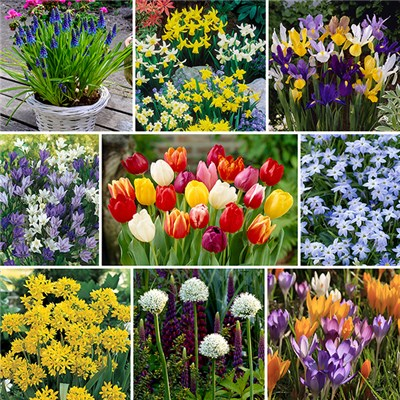 Complete 300 Spring Bulb Collection