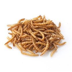 Extra Select 5L Tub Mealworms