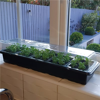 Windowsill Propagator Kits (3 Pack)