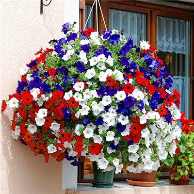 Patriotic Petunia Collection - 24 jumbo plugs in red, white and blue