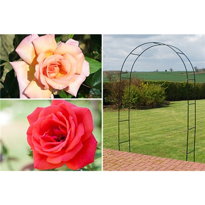 Pair of Climbing Roses with 2M Garden Arch