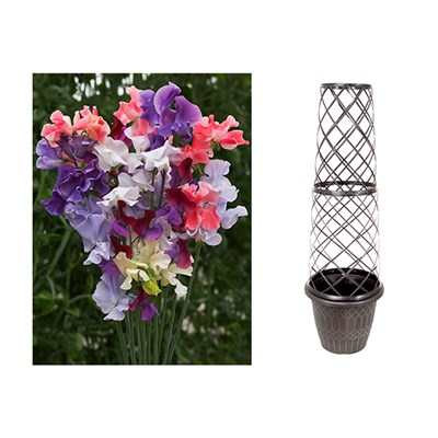 Tower Pot & Trellis with 100 Sweet Pea Seeds