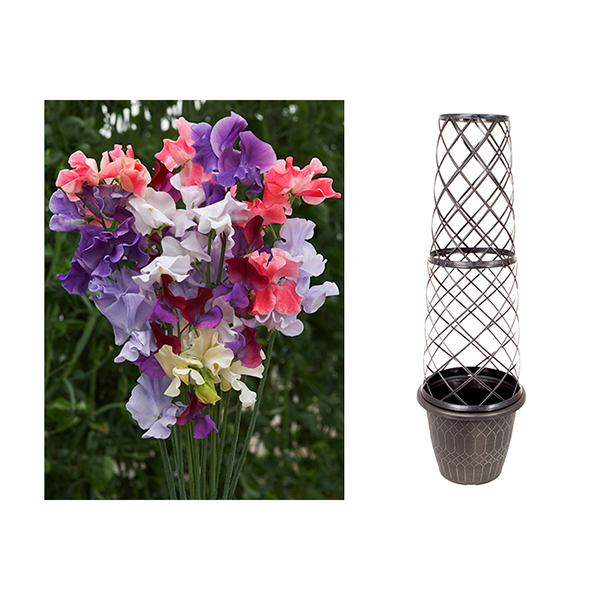 Tower Pot & Trellis with 100 Sweet Pea Seeds No Colour