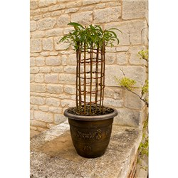 Living Willow sculpture Cylinder Design 3L Pot 60cm Tall