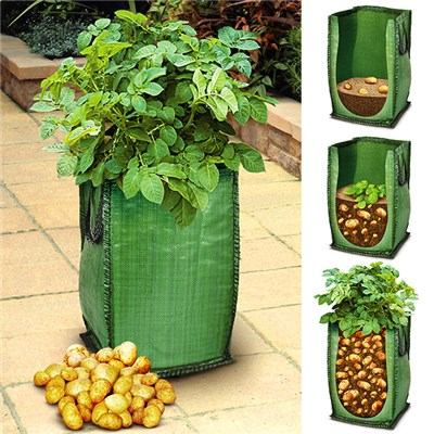 Starter Potato Grow Kit - 3 Varieties and Pods