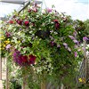 Pack of 4 15inch Easy Fill Hanging Baskets with 8 Gates Baskets with a 500g tub of Garden Boost Swell Gel and Feed No Colour