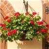 Set of 4 x 12 Rattan Hanging Baskets No Colour