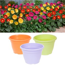 3 Bright Gerbera Garvinea 7cm and 3 Bright and Bold Planters