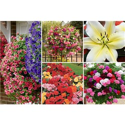 Lucky Dip 48 Bedding & Basket Plant Bundle with 5 Big Brother Lilies FREE
