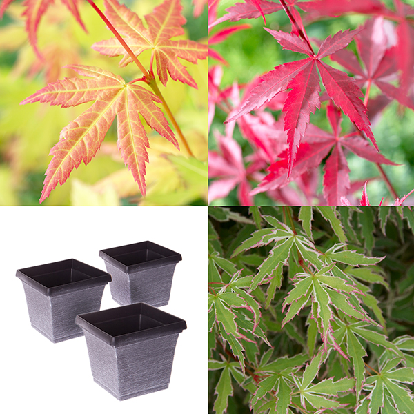 Acers and Metallic Square Planters (3 Pack) No Colour