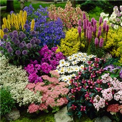 Lucky Dip Cottage Garden Perennial Collection - 12 x 9cm pots