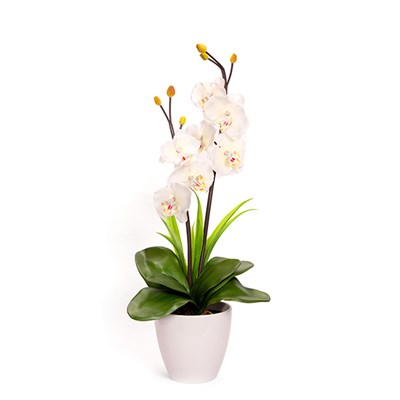 7 Light Phalaenopsis pot in White Or Purple