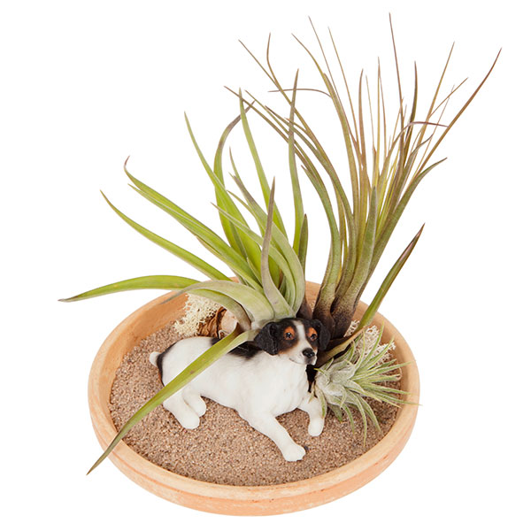 Lazy Dog Airplant kit No Colour