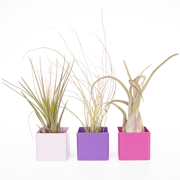 Contemporary Cubes Airplant Kit No Colour