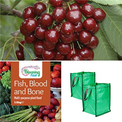 Pair of Stella Cherry Trees with 2 x Grow Pods & 1.5kg Fish Blood & Bone