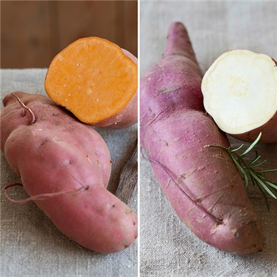 Sweet Potato Collection (6 Pack)