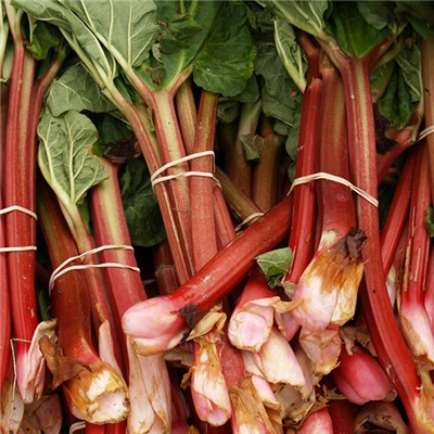 Giant Rhubarb Forcing Kit - 1 x Giant Crown & 2 x 30L Pots