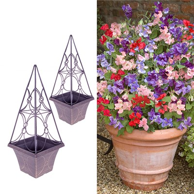 Eclipse Planters with 24 Patio Perfect Sweet Pea Plants (Pair)