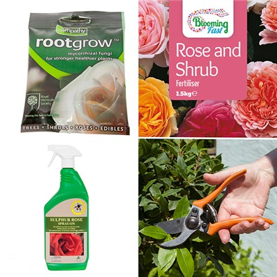 Rose Care Pack - 1.5kg Feed, Secateurs, RHS Rootgrow and Sulphur Rose Tonic