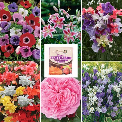 17th Birthday Half Price Gardening Bundle 1 Rose, 6 Plug Plants, 60 Bulbs, 100 Seeds and Fertiliser