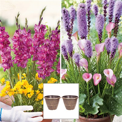 Summer Bulbs Plant O Mat Bulb Pods and Planters
