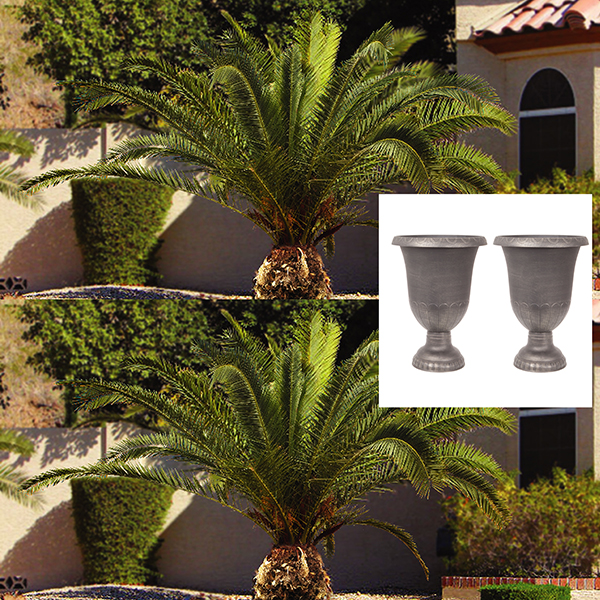 Pair of Medium Gardens Urns with Pair of Phoenix Palms No Colour