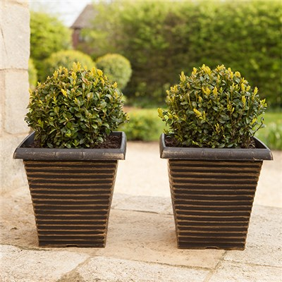 Pair of Box (Buxus) Balls 25cm with 10 Inch Tall Tapered Planters