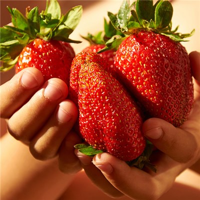 Giant Strawberry 'Colossus' Jumbo Plug Plants (6 Pack)