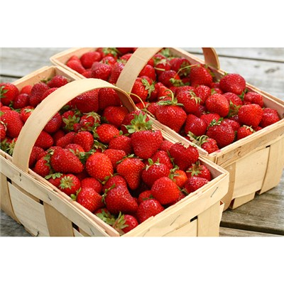 Set of 6 Strawberry Elsanta Plants in 1.5L Pots