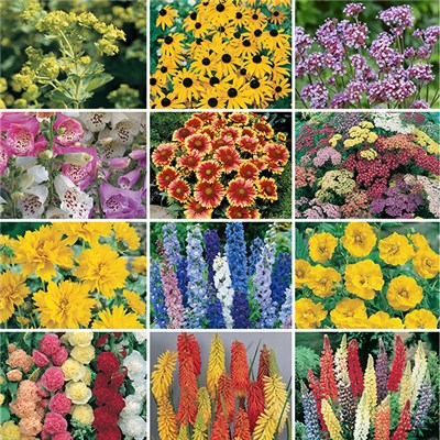 Cottage Garden Perennials Jumbo Plugs (12 Pack)