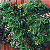 WonderWall Vertical Wall Planter System - 4 Pack