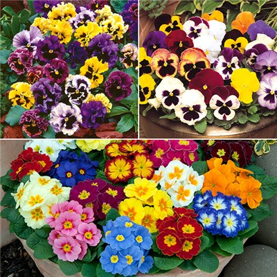 Autumn Bedding Plug Mix (120 Pack)