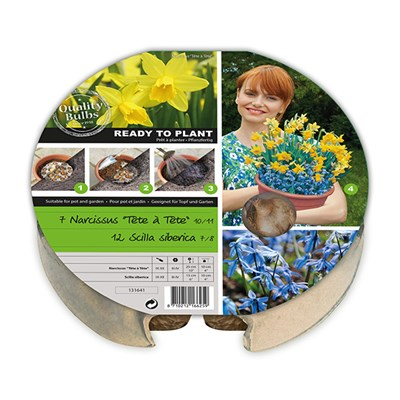 Drop in Bulb Planter Narcissi & Scilla Bulbs (19 Pack)