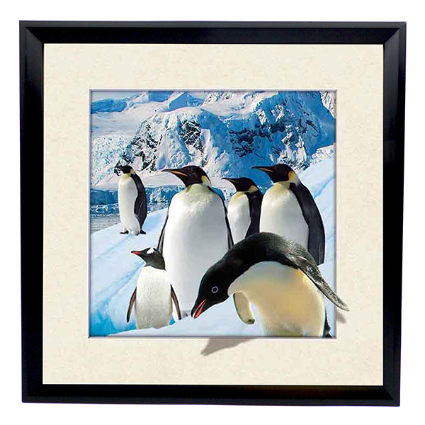 Emperor Penguins 5D Illusion Framed Art 40cm x 40cm No Colour