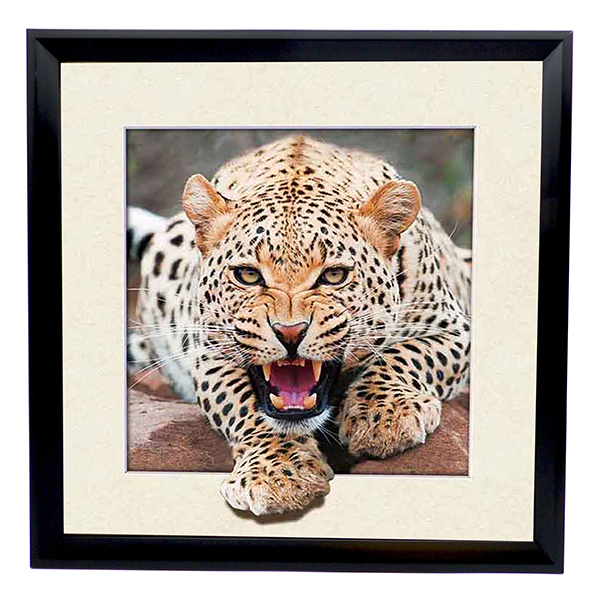 Leopard 5D Illusion Framed Art 40cm x 40cm No Colour