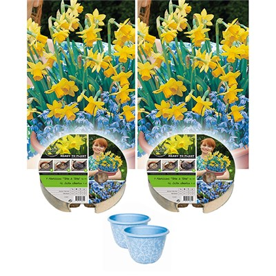 Narcissi Plant-o-Mat Drop-in Bulb Planters with Decorative Pots (Pair)
