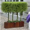 Pair of Plaited Living Willow Half Standards 3L Metallic Pots 60cm Tall